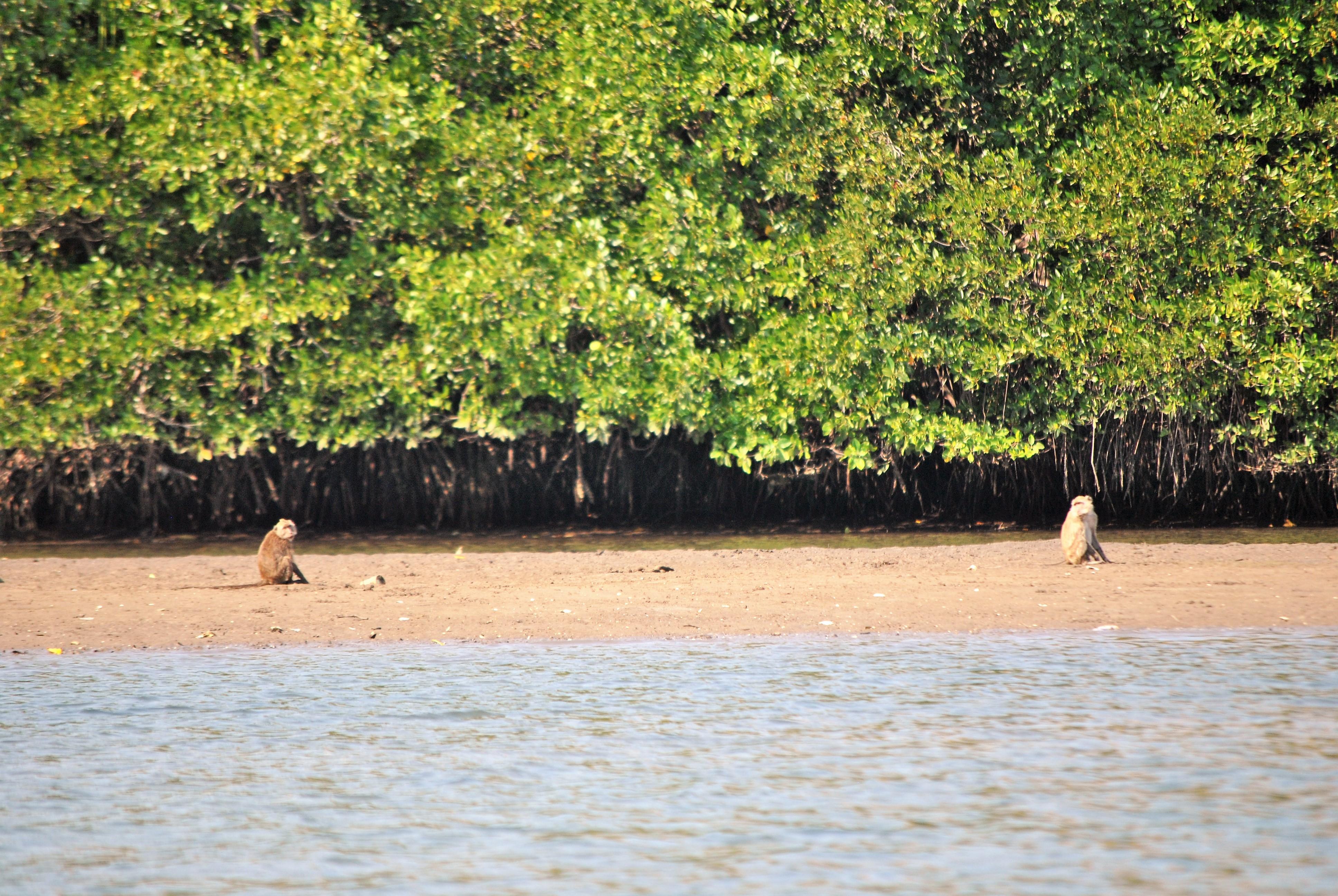 Beach monkeys!