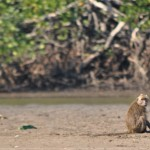 One little monkey sitting on a beach...