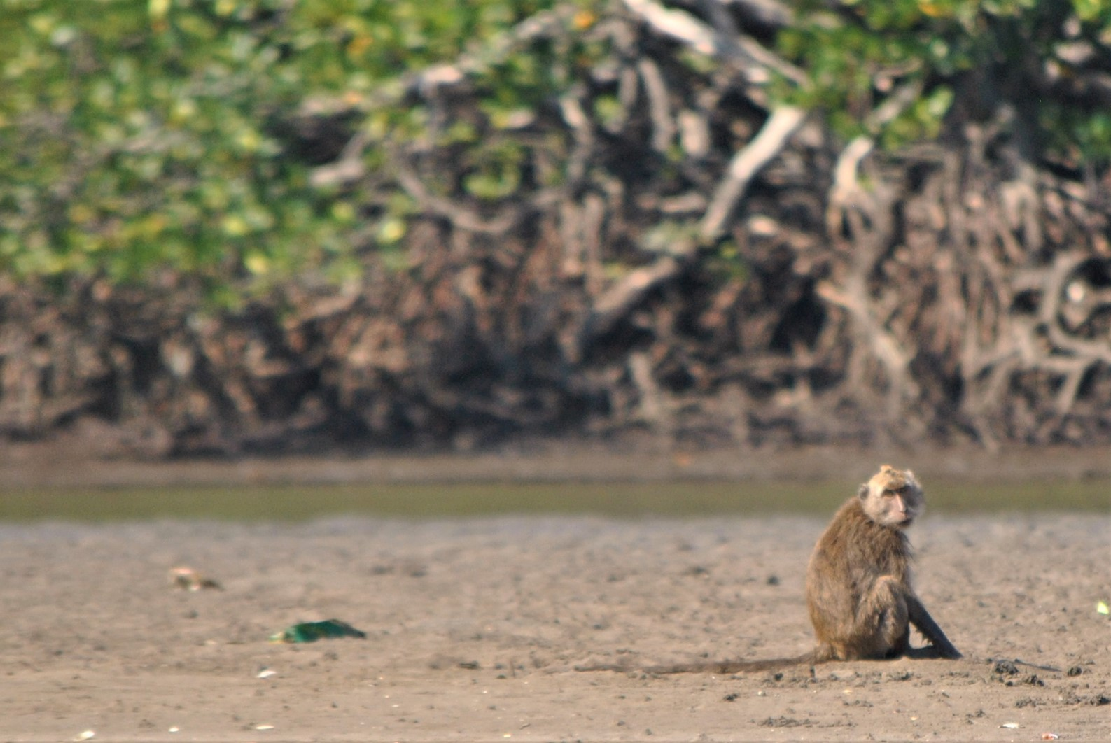 One little monkey sitting on a beach...