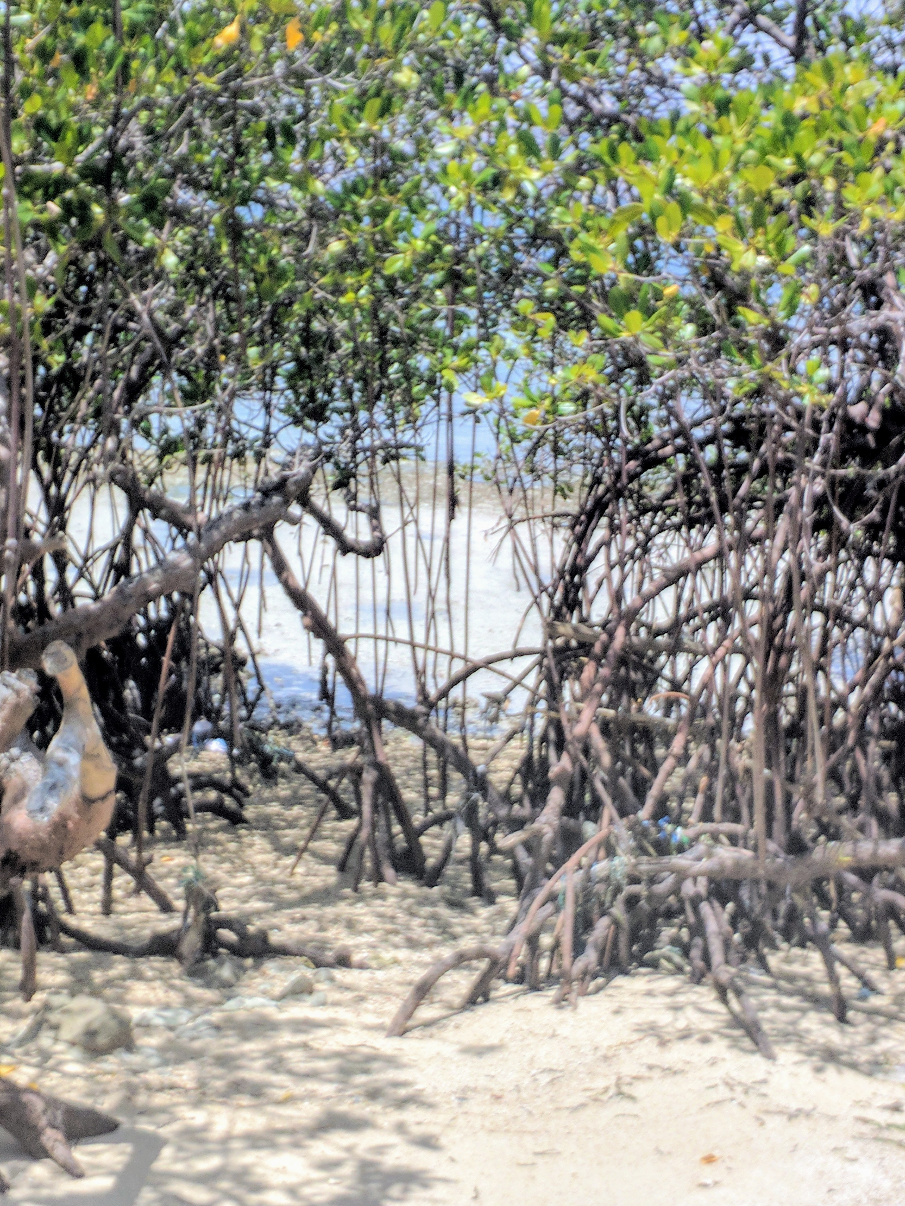 Mangroves on the outer islands