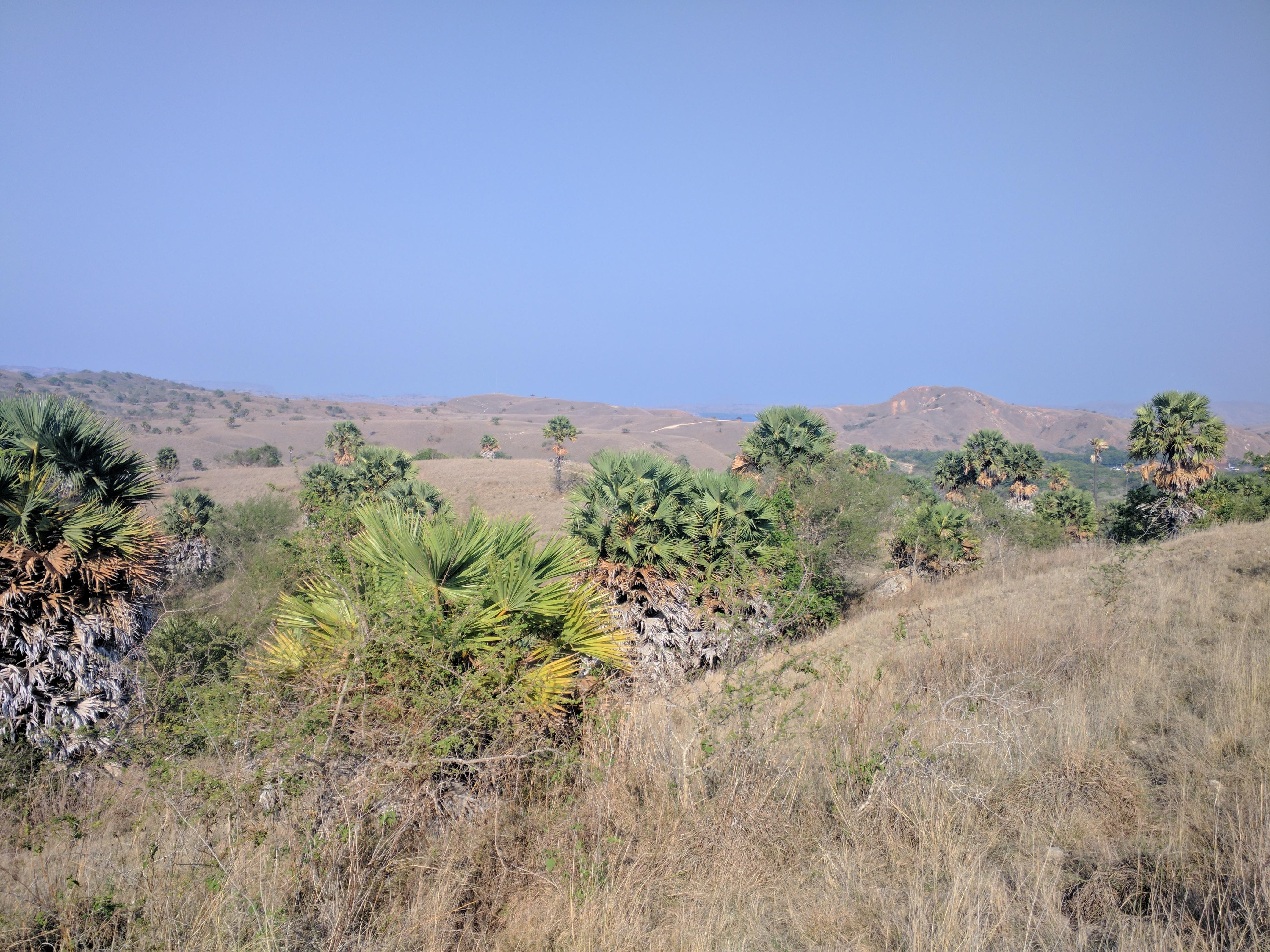 More vista